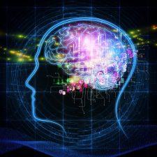 Human brain diagram.